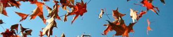 banner-falling-leaves-1