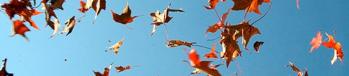 banner-falling-leaves-2
